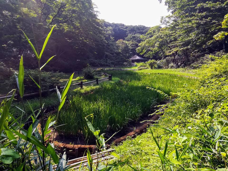 Le jardin aux iris, qui était sans doute beaucoup plus joli il y a deux semaines, quand les fleurs en question n'avaient pas encore toutes été coupées.