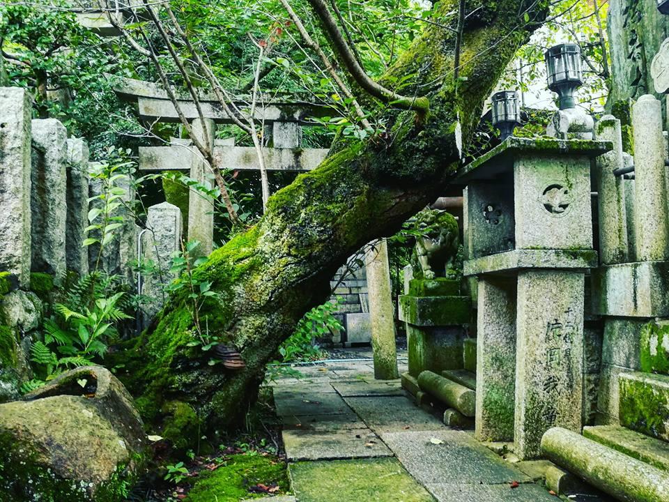 Cimetière Shinto.