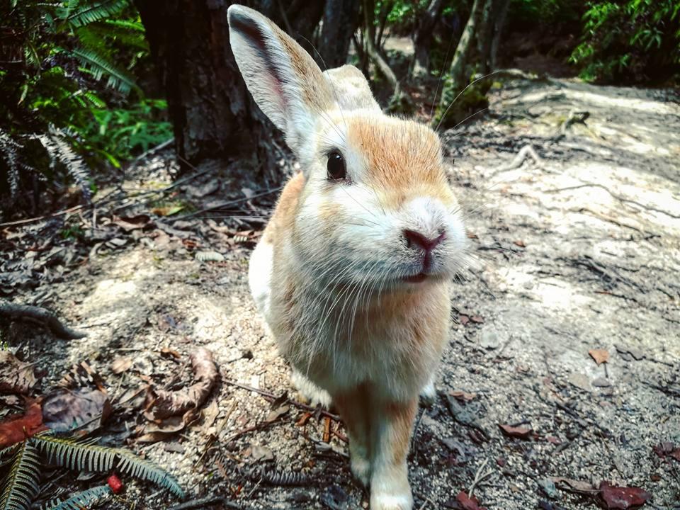 Un lapin affamé dans la forêt.