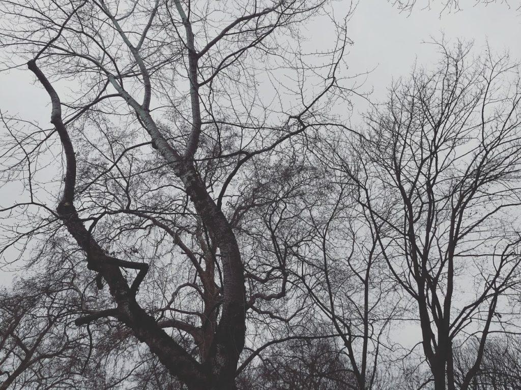 Parc Monceau, janvier 2020